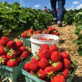 strawberry-buckets