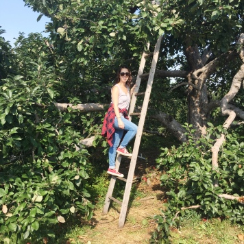 honey-pot-hill-apple